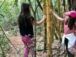 Recorriendo un sendero de selva en la Estancia Santa Inés
